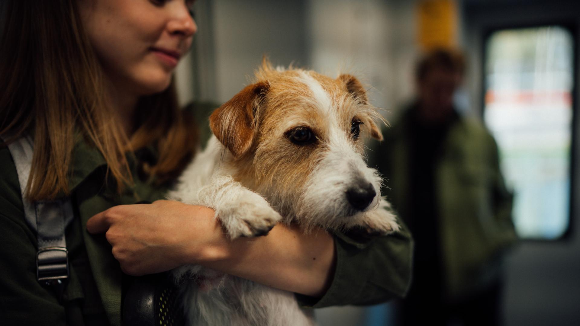 woman carrying esa dog at airport