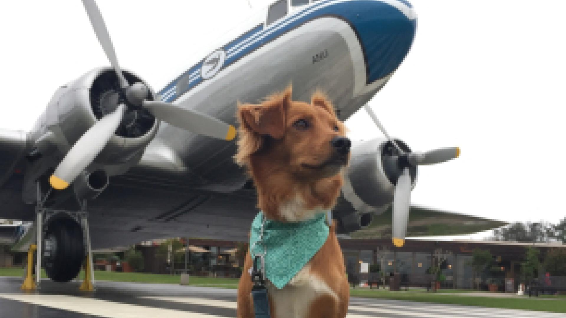 Esa dog at airport