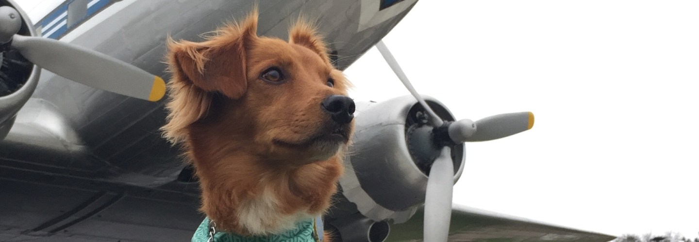 Which Airlines Allow Emotional Support Animals