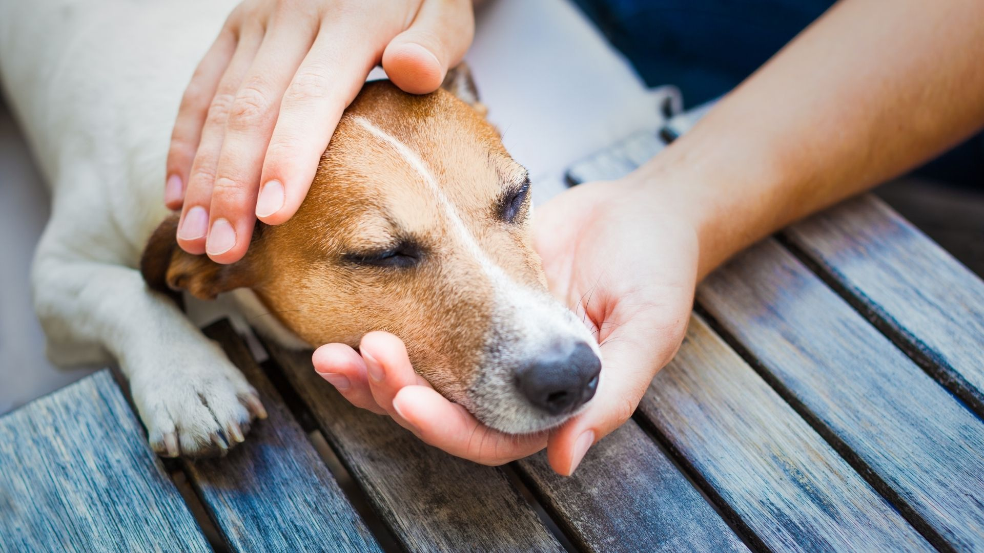 You should not give your dog any pain medication unless you ask your vet first. Even if you have given your dog ibuprofen before...