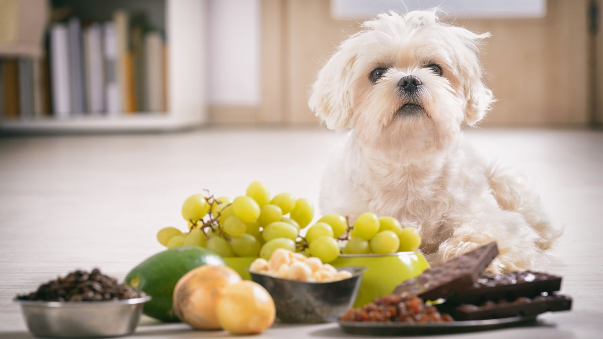 Chocolate, grapes, garlic, and tomatoes are all toxic to cats and dogs. Besides these, even tiny amounts of...
