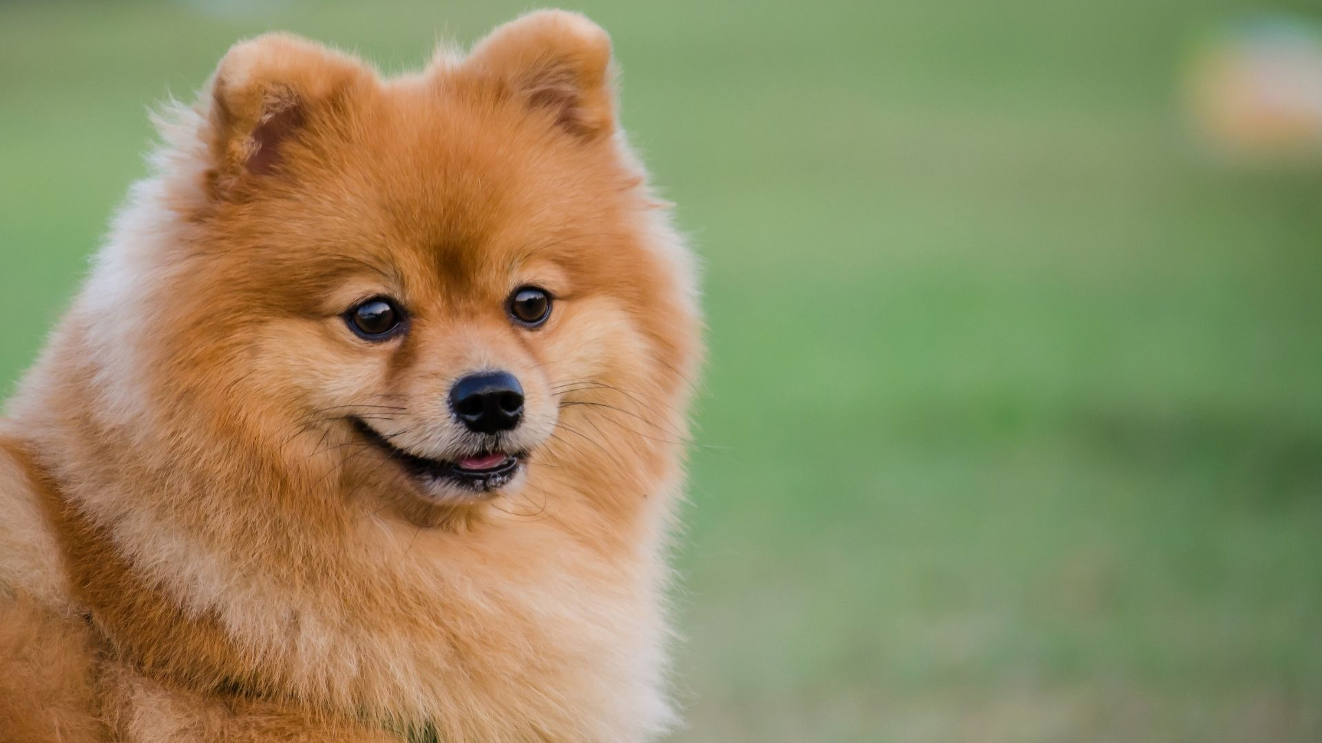There are many different types of dry skin remedies for dogs, including lanolin, vitamin E, olive oil, liquid glycerin, and...