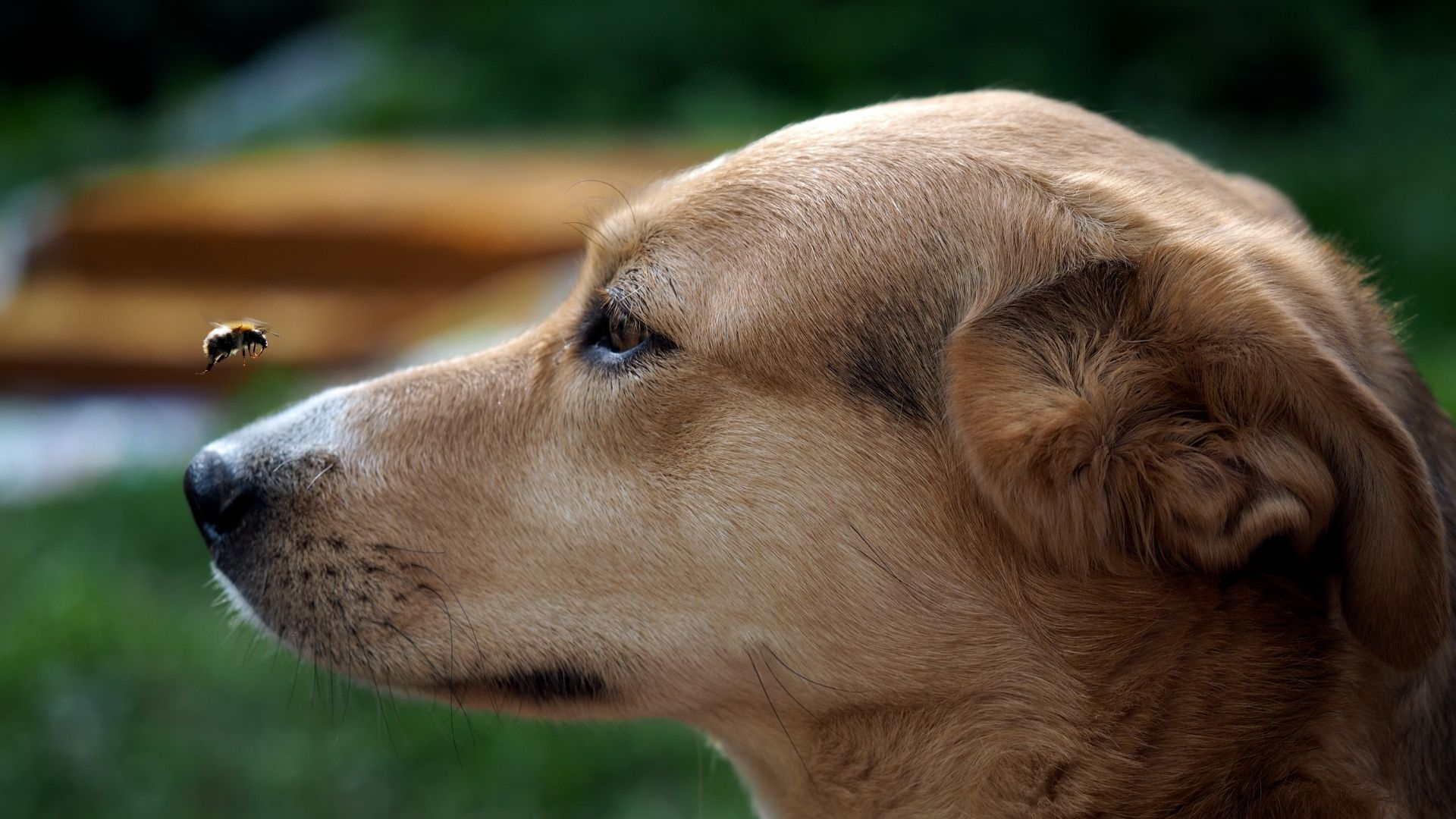 The first thing to do if your dog is stung by a bee is to gently remove the bee stinger with tweezers. After that, take your dog...