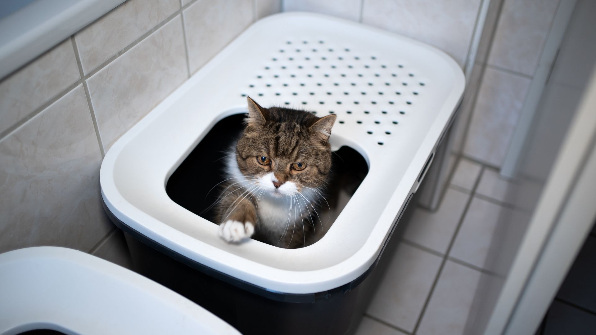 What Should I Do for My Constipated Cat?