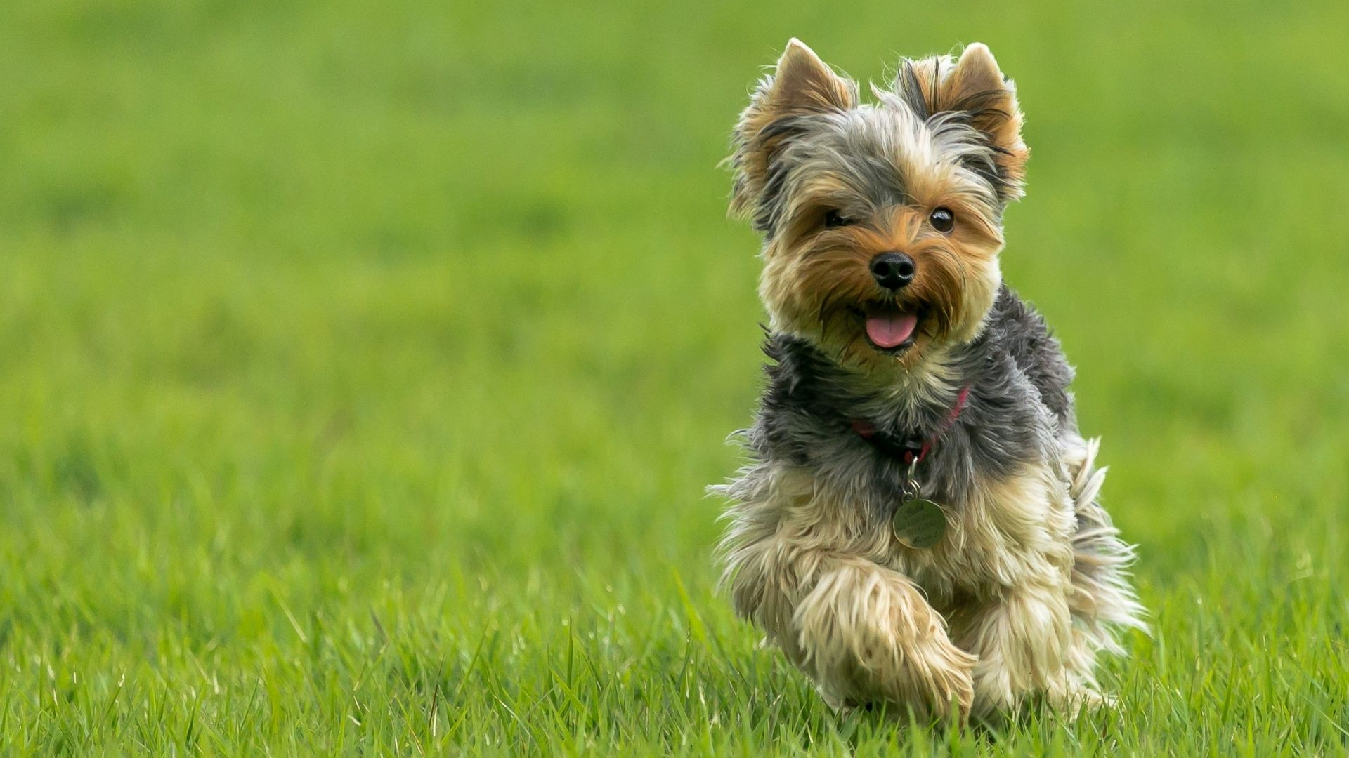 Dogs may walk in circles because of systemic lupus erythematosus, distemper, or neosporosis. If your dog begins to walk in circles...