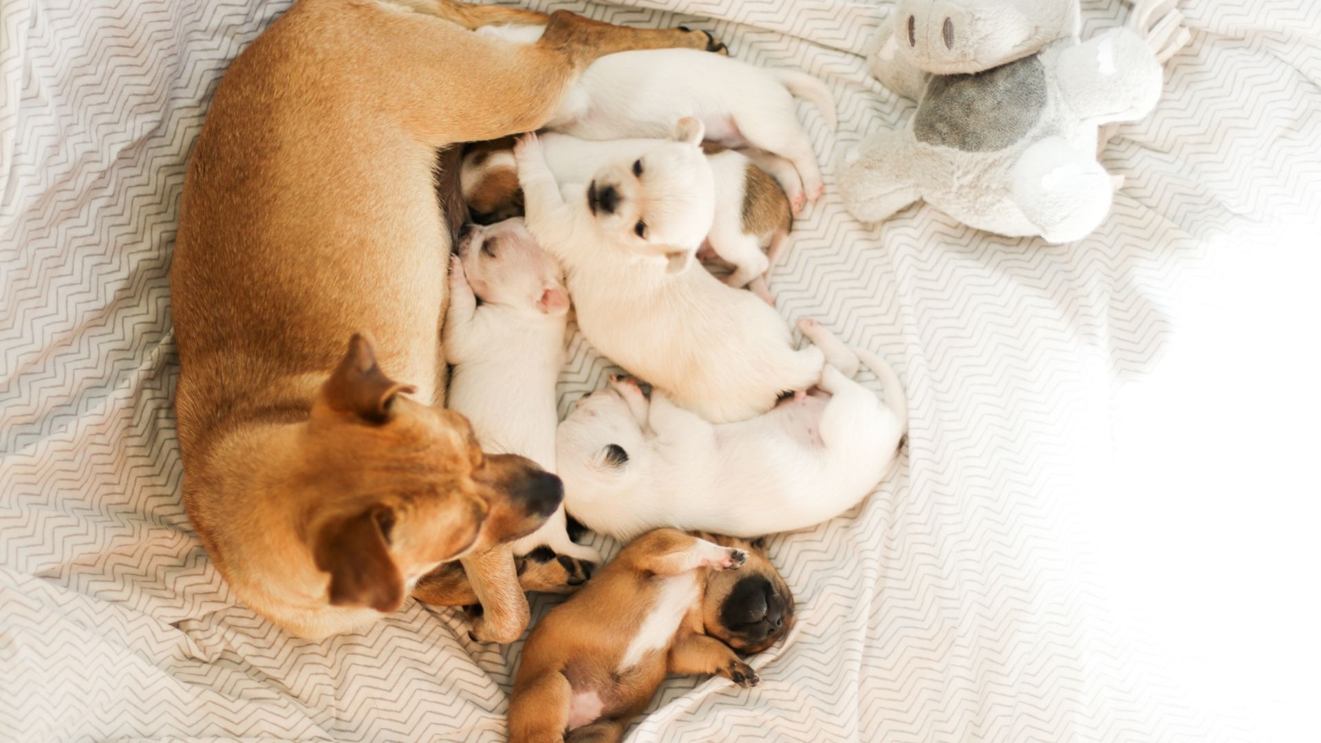 A pregnant dog generally gains weight, has enlarged mammary glands, and may experience personality changes. The only way to be...