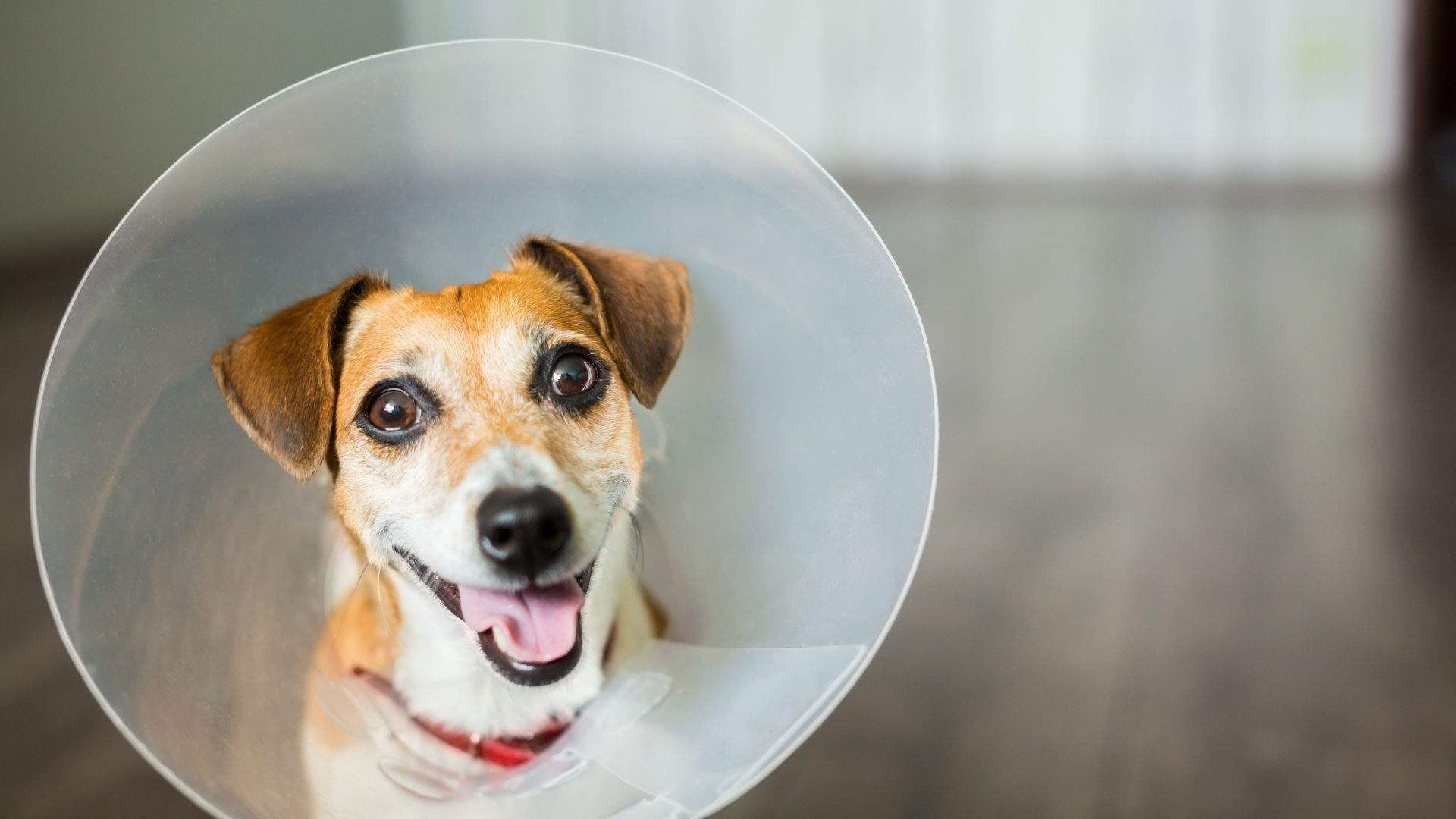 The best way to prevent dog wound licking is generally to put an Elizabethan collar, or e-collar, on the dog. Since the collar...