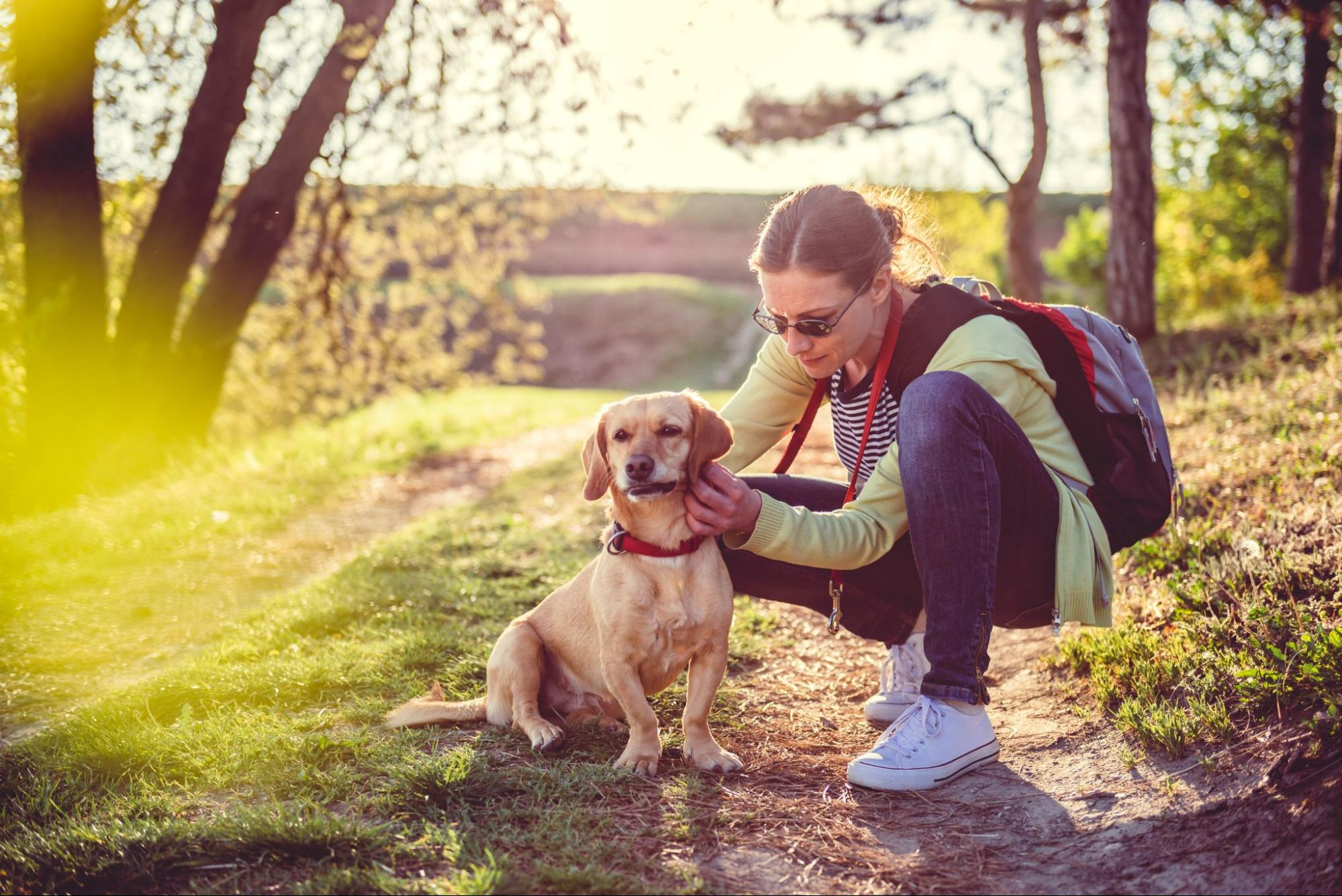 The best way to remove a tick on a dog is to first make the tick loosen its bite and then to use curved tweezers to gently pull...