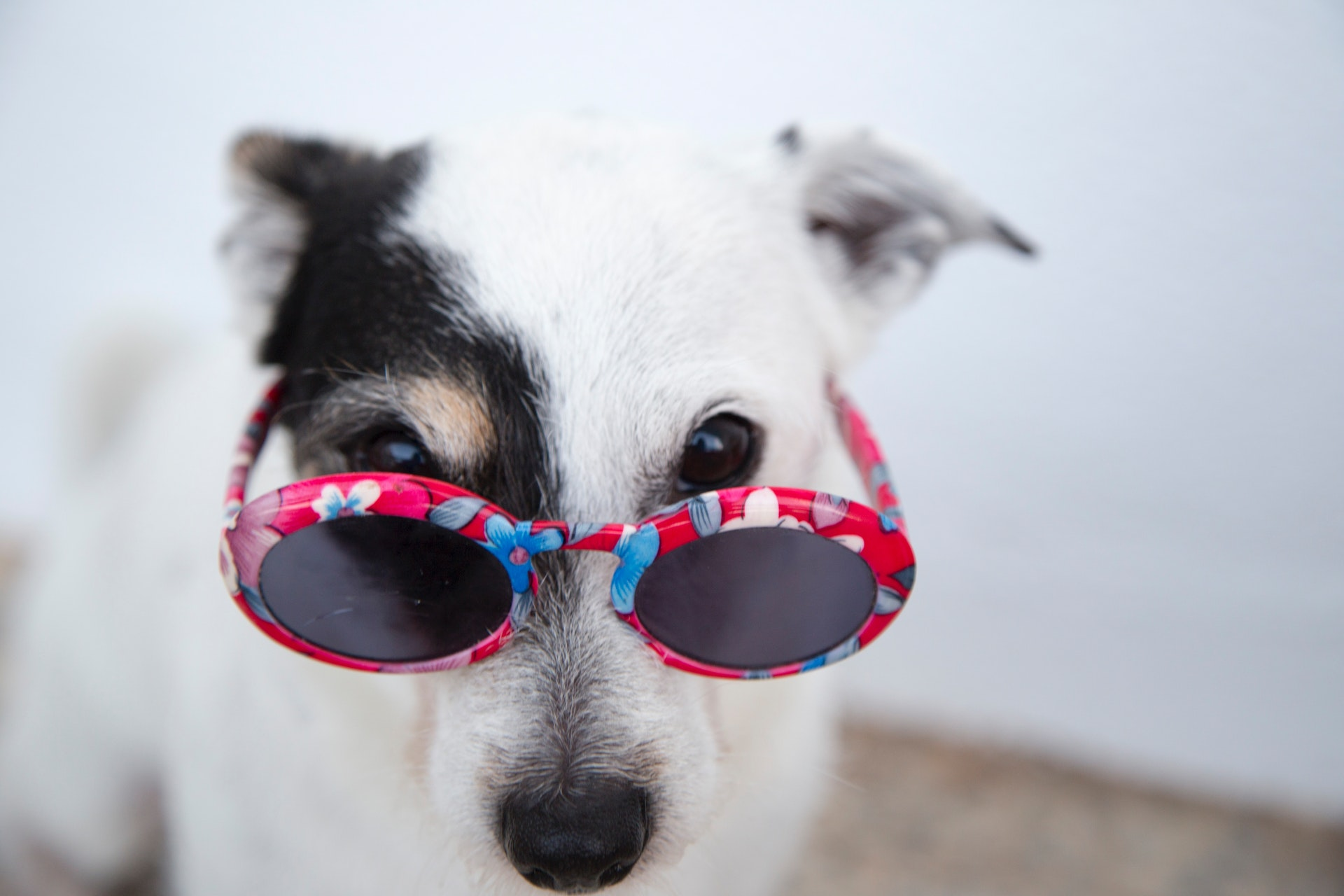 You can typically treat a dog eye infection by using a homemade mix of water and salt. Though it can be tempting to use...