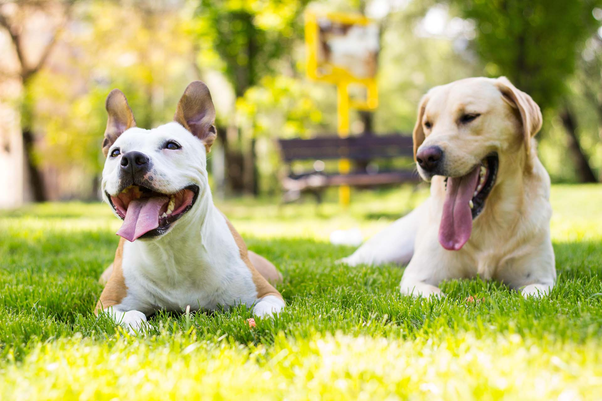 The most common signs of tetanus in dogs are an inability to blink, irritability, drooling, and muscle spasms. If the tetanus is...