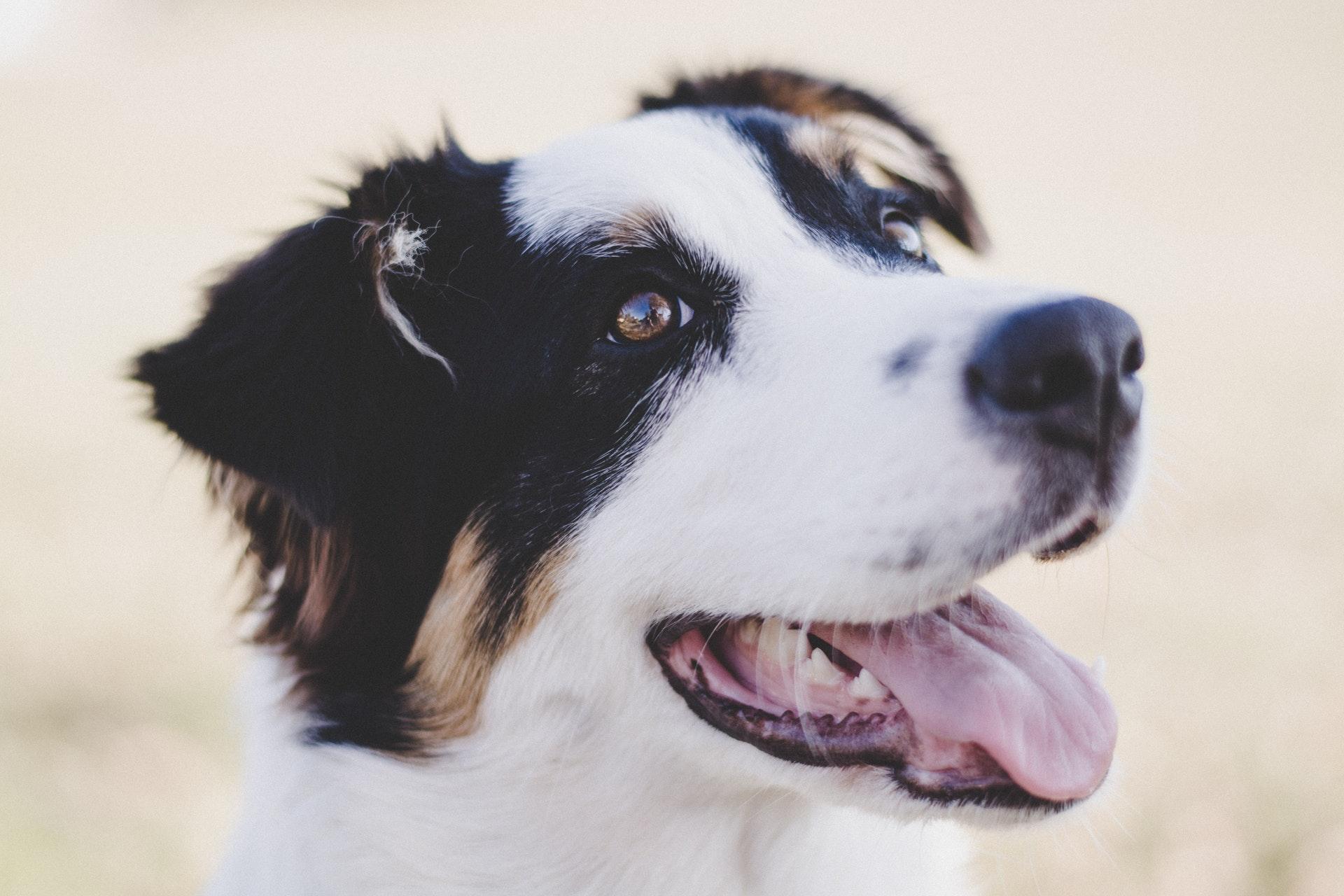 tetanus in dogs