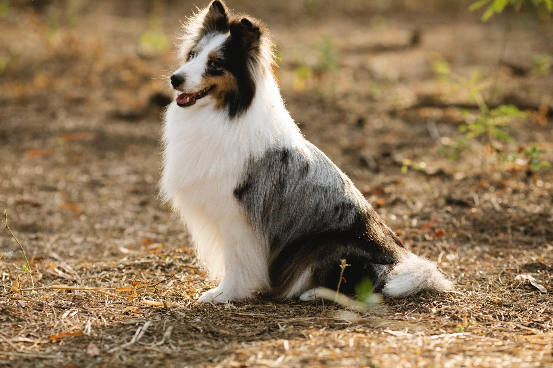 aloe vera for dogs