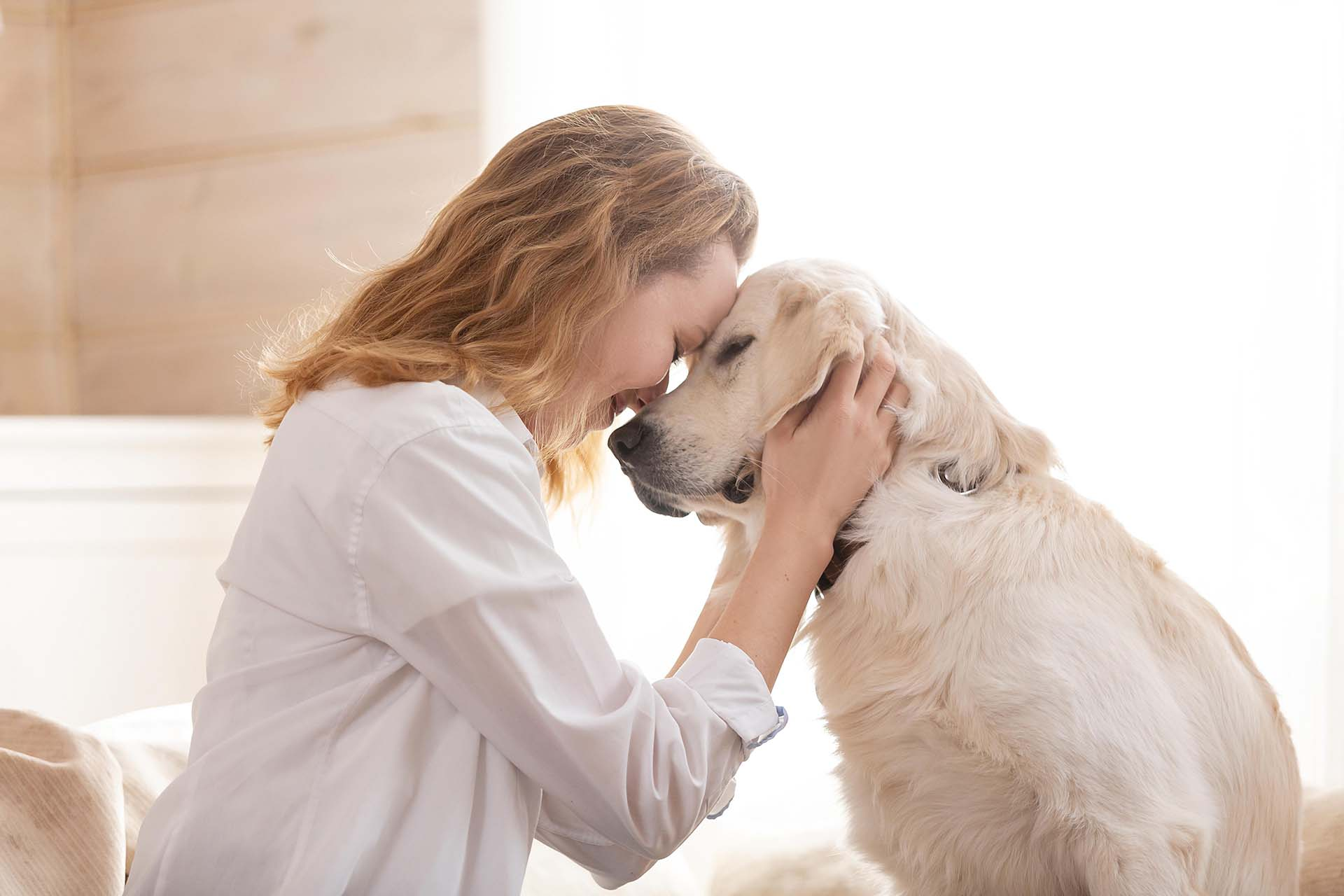 Brief and Straightforward Guide: What is a Therapy Dog? (with pictures)