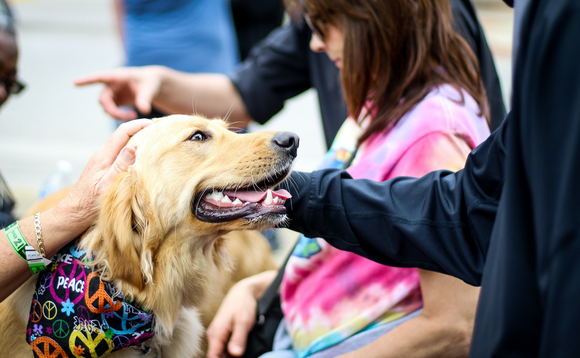 therapy dogs for companionship