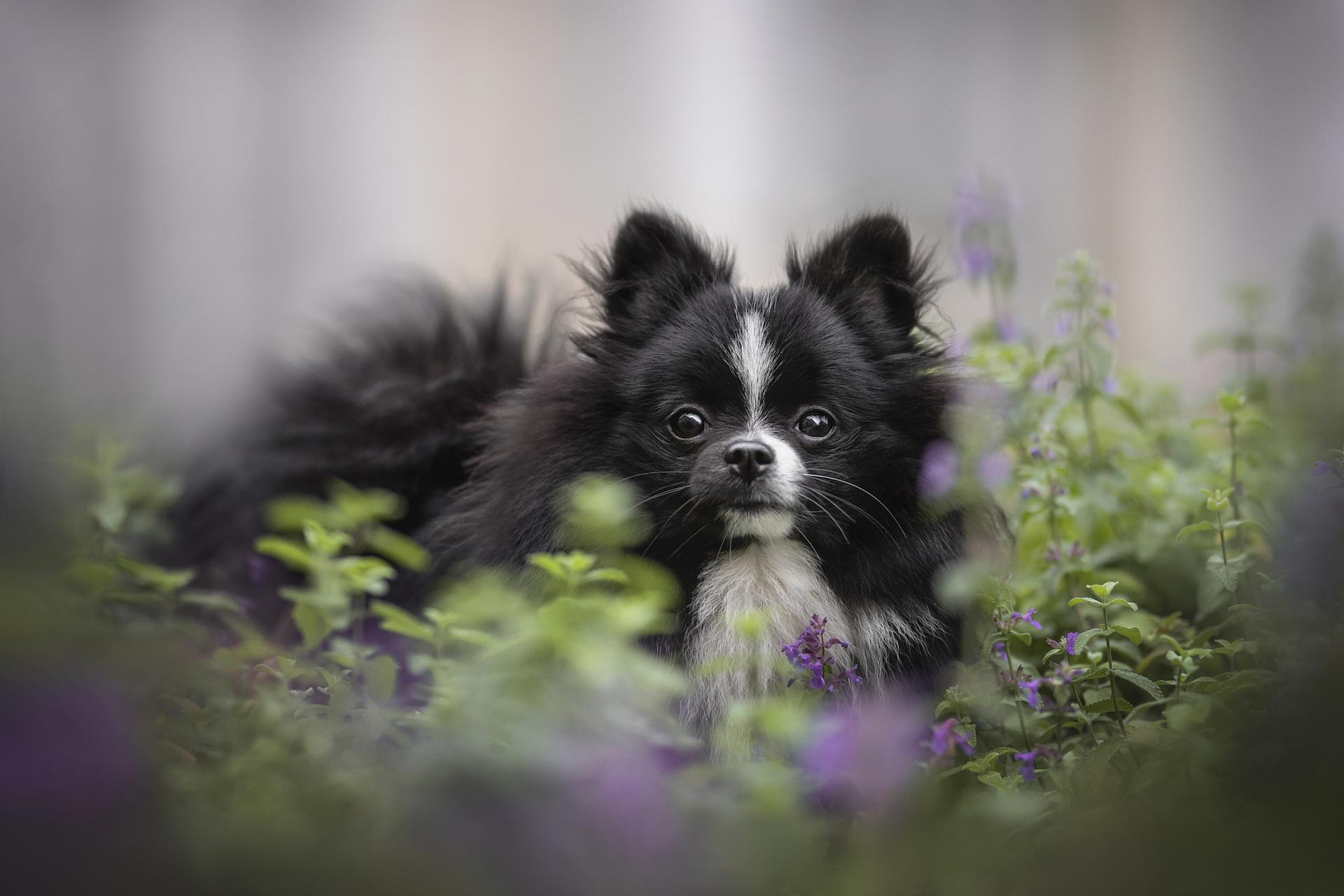 The effects of catnip on dogs are not nearly as strong as on cats, but it can make them feel calm. It can also help a dog with...