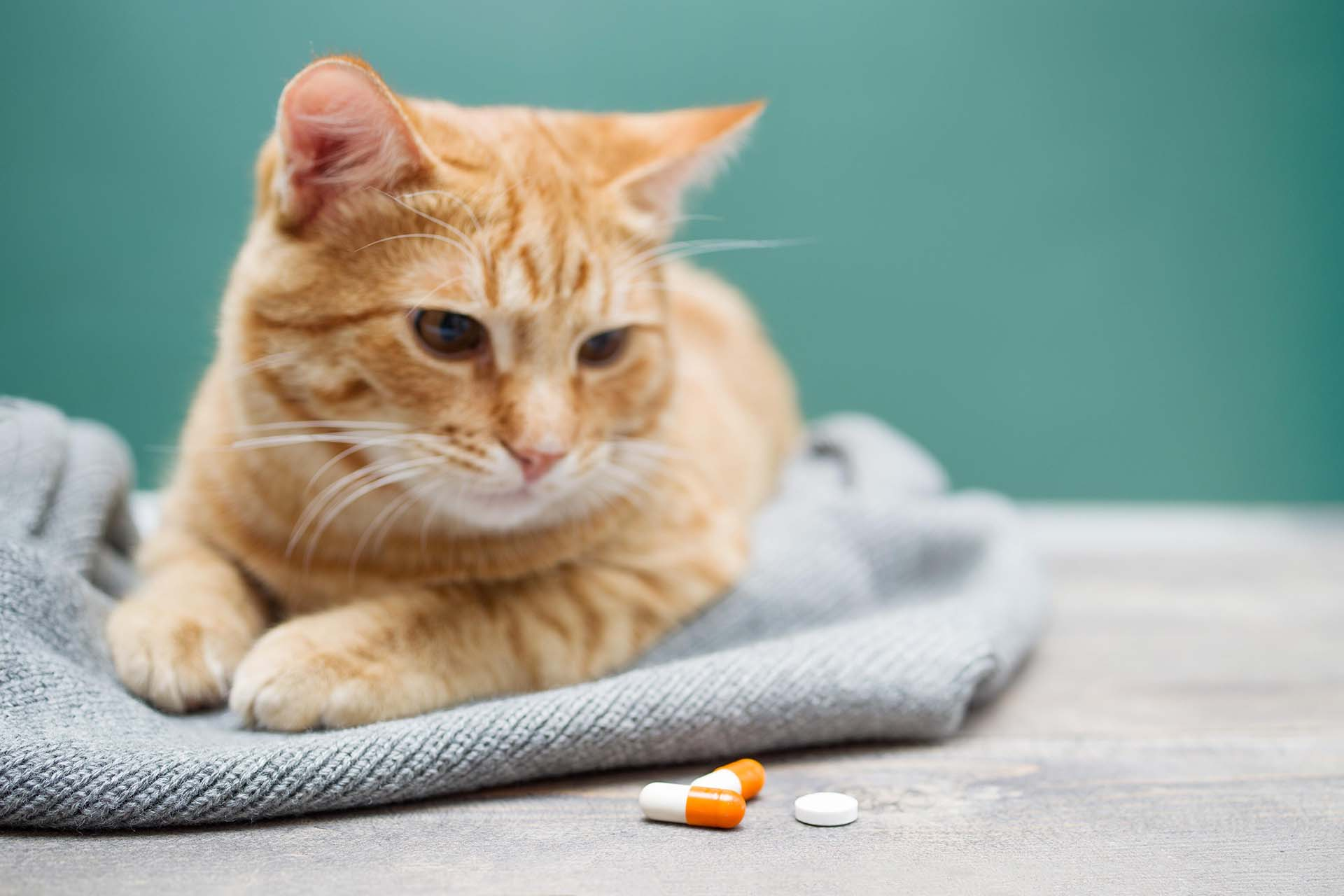 What Are the Uses of Mirtazapine for Cats?