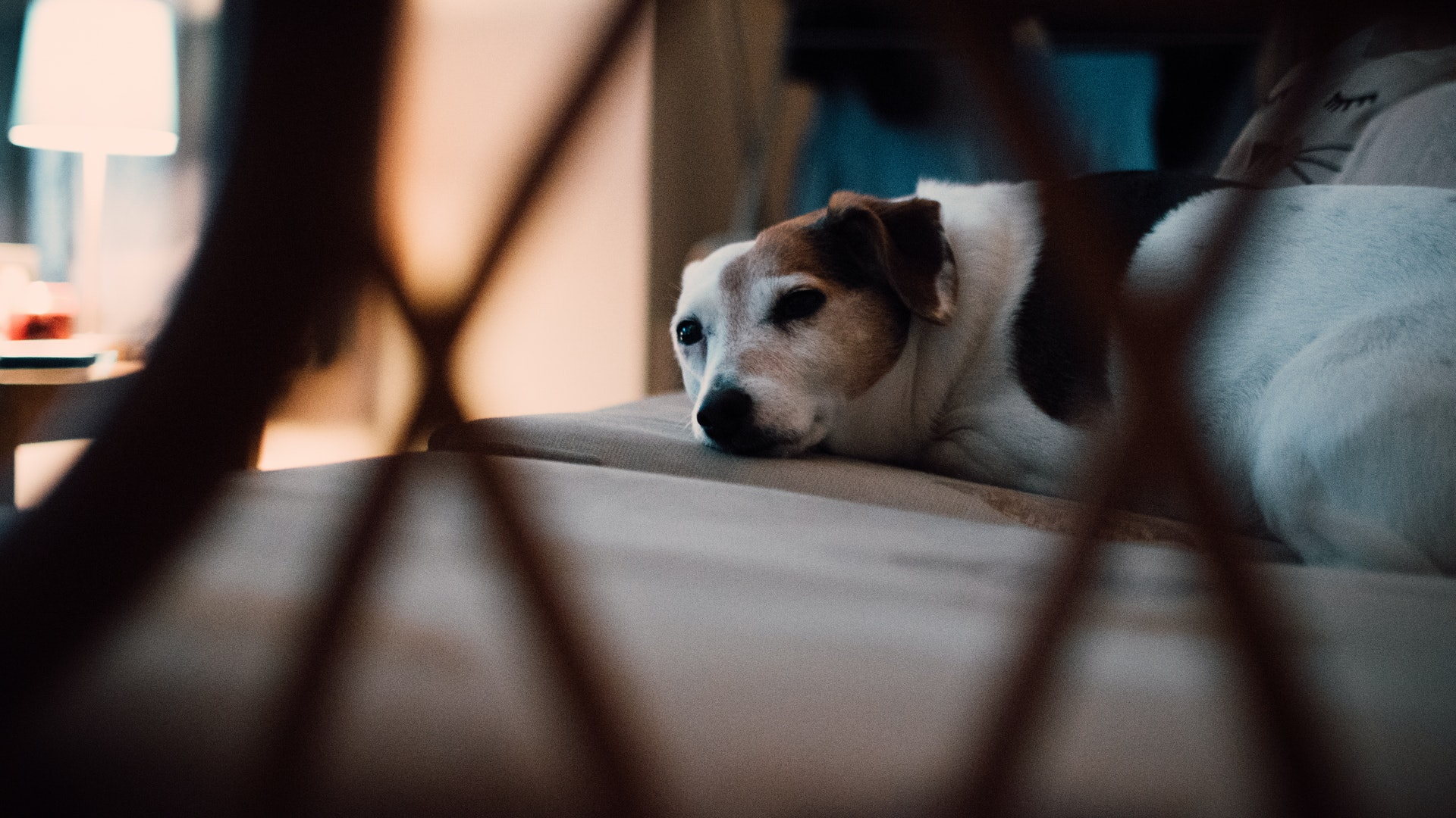 It's not entirely clear why dogs turn around three times before lying down, but best guesses say that it may be genetically...