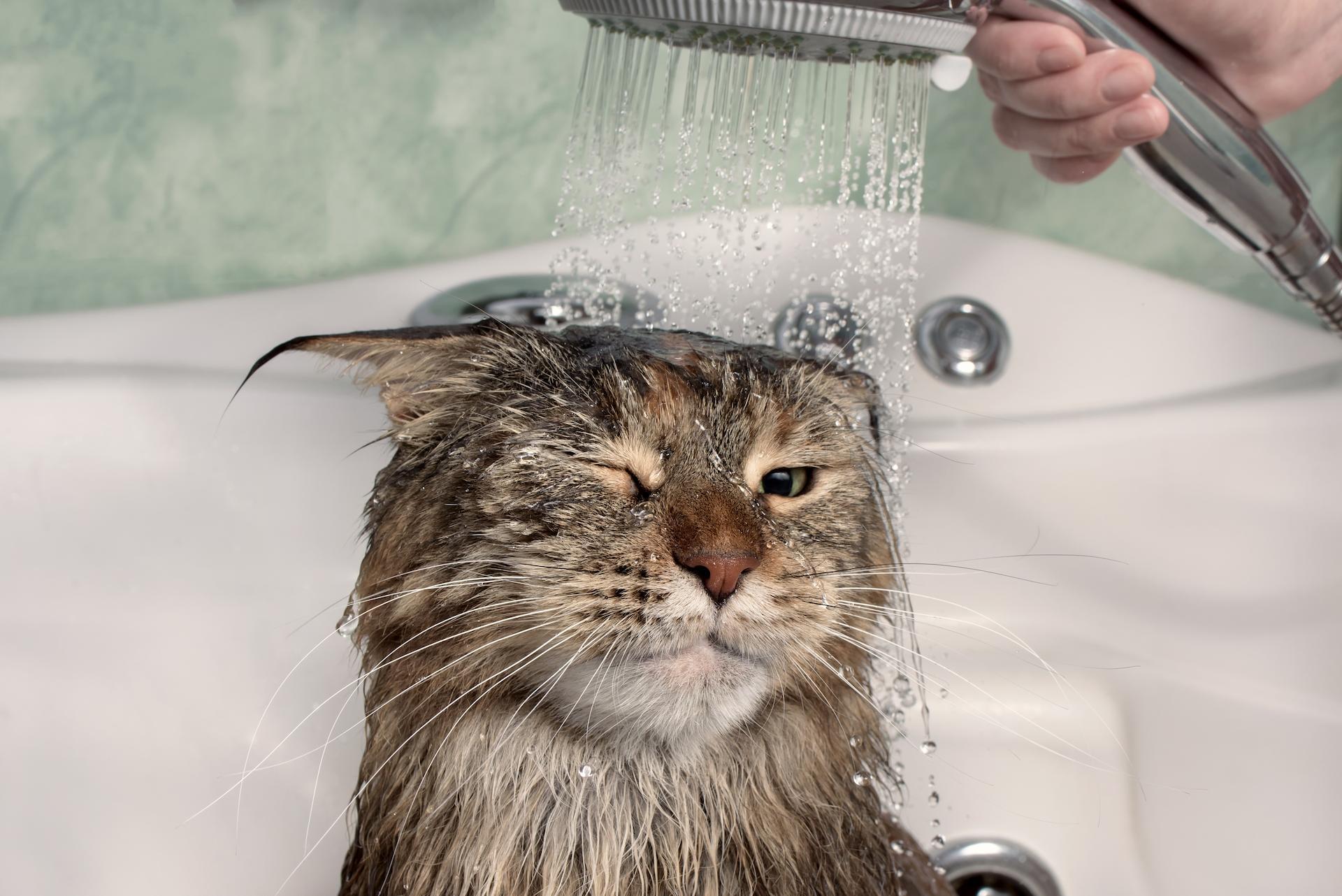 How do I Bathe a Cat?