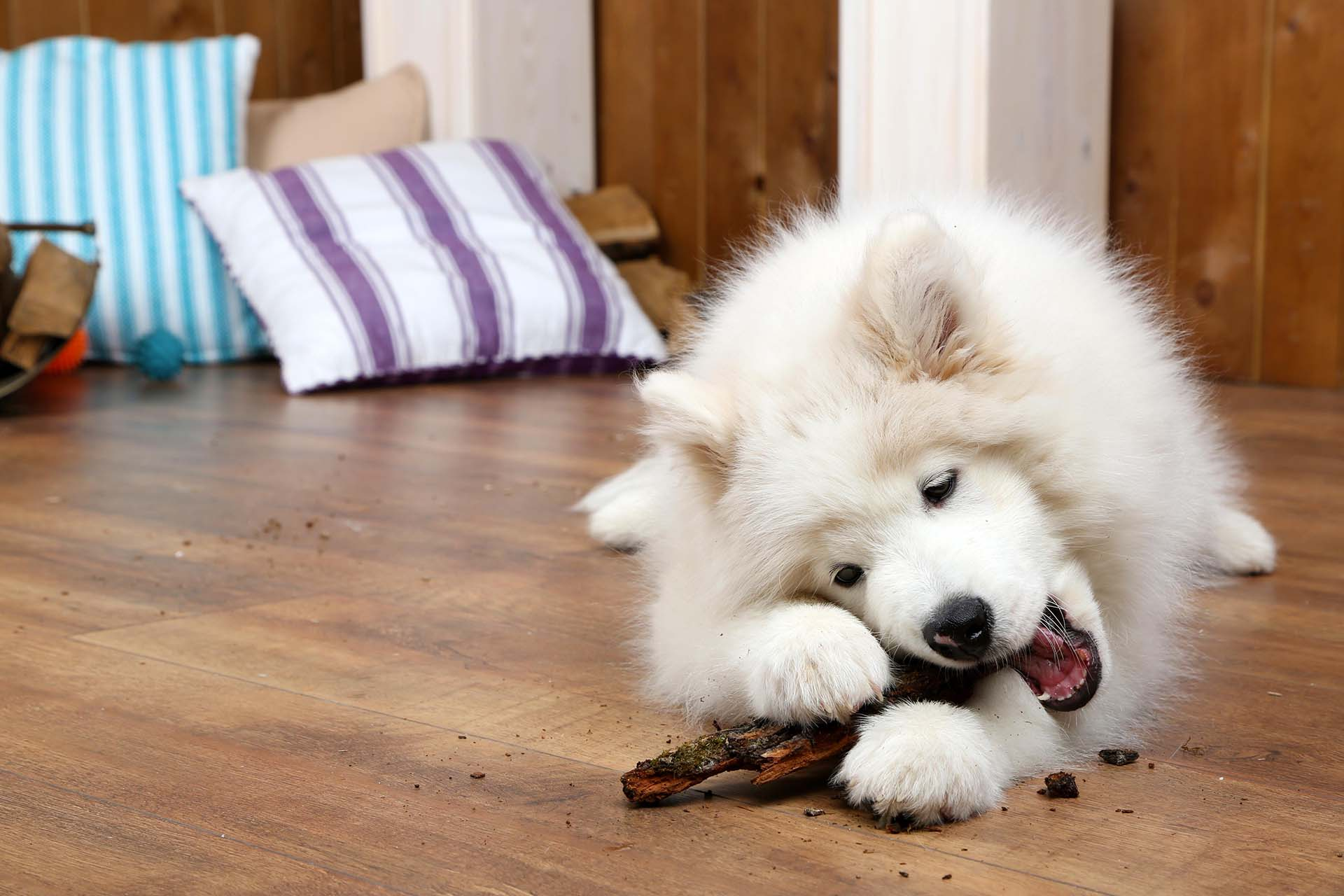 You can often stop your dog chewing on everything by making sure it gets plenty of exercise, supervise it and correct it when...