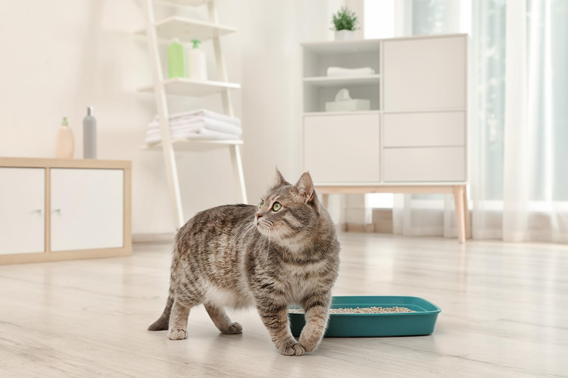 How can I Keep my Cats from Tracking Litter Around the House?