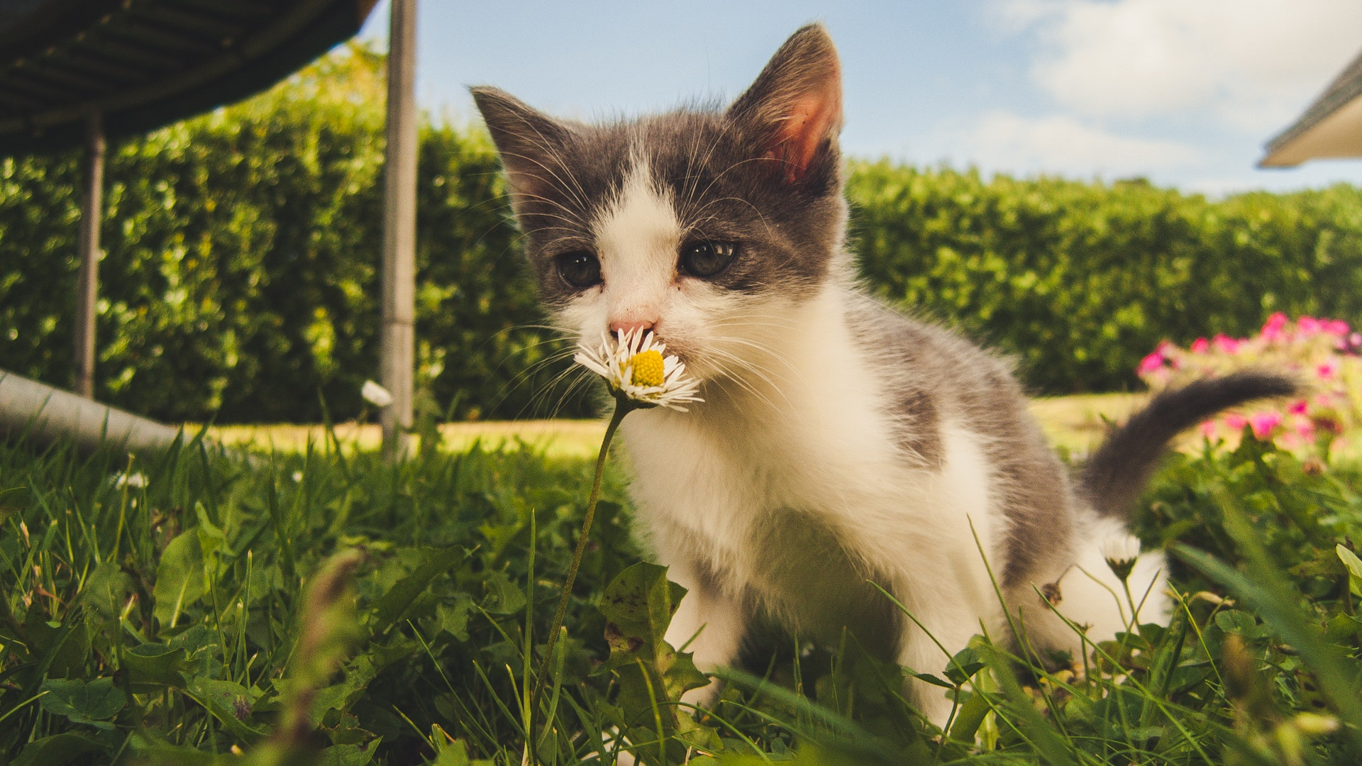 how to keep cats from tracking litter around