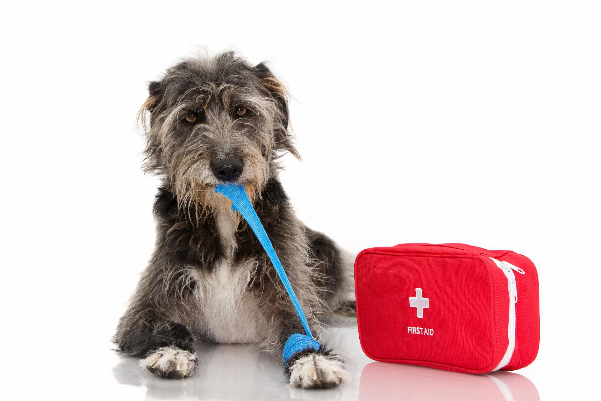 When choosing a dog bandage, consider the type of wound the dog has, what the bandage is made of, what part of the body the wound...