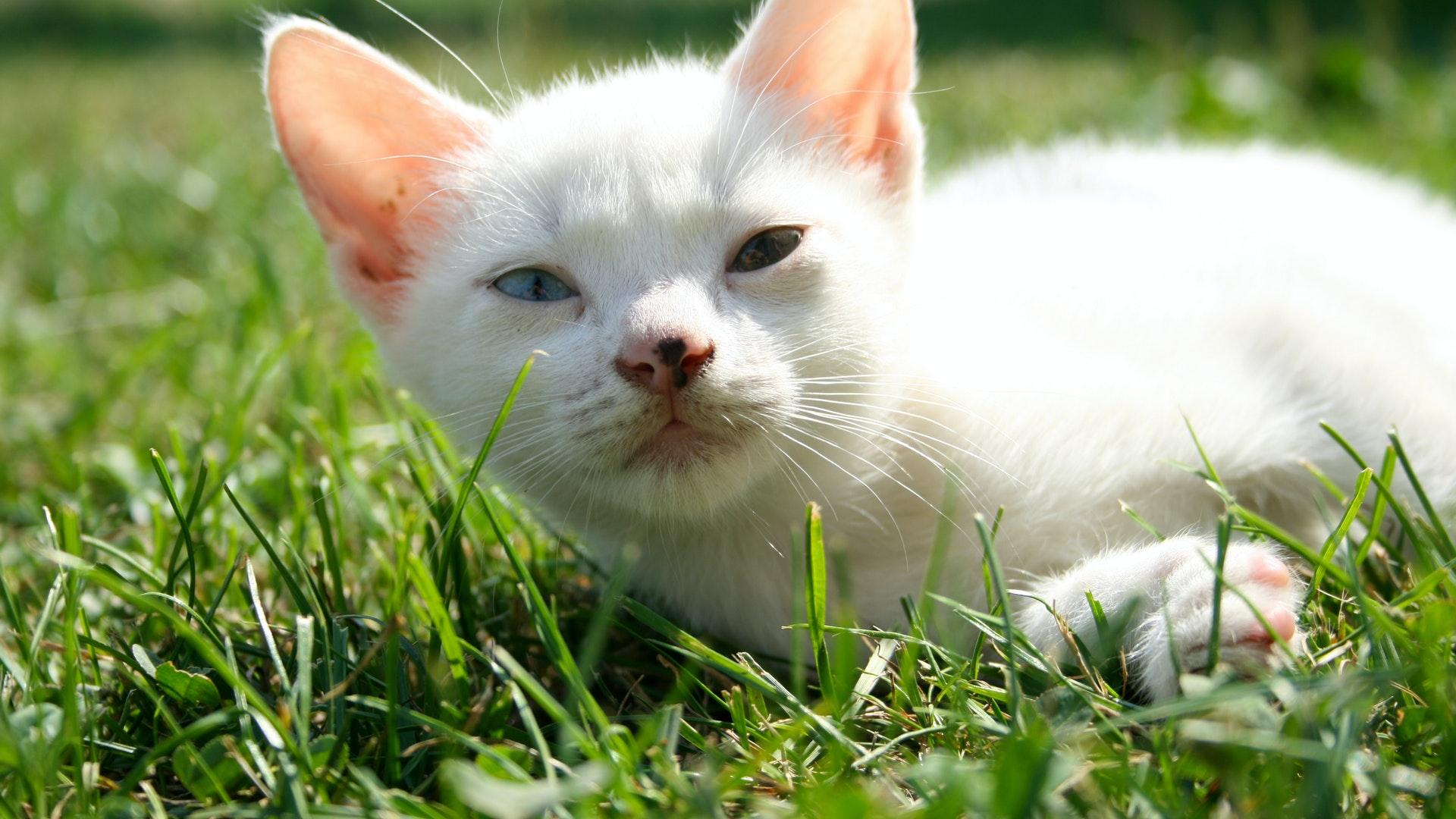 best cat grass