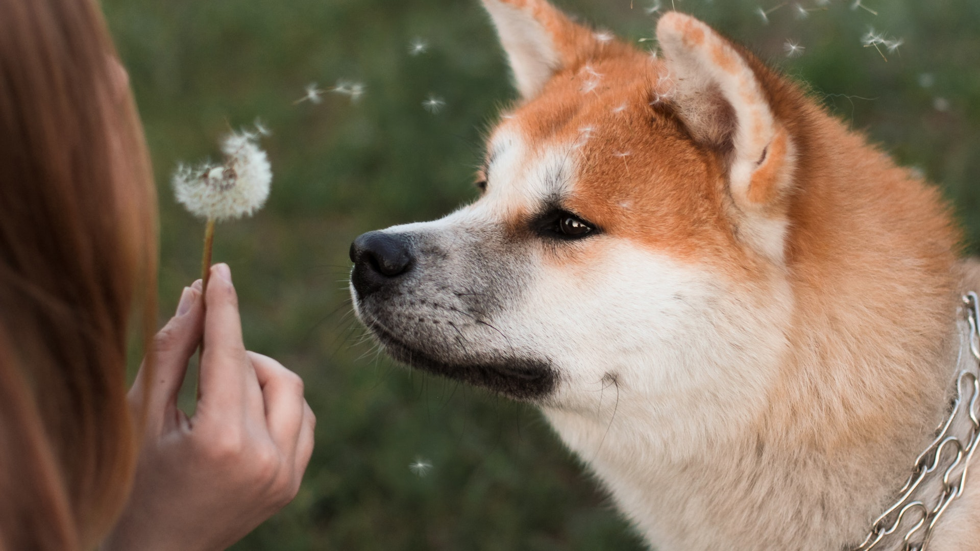 It's best to talk to a vet before choosing an antihistamine for dogs, but for acute allergic reactions, experts often recommend...