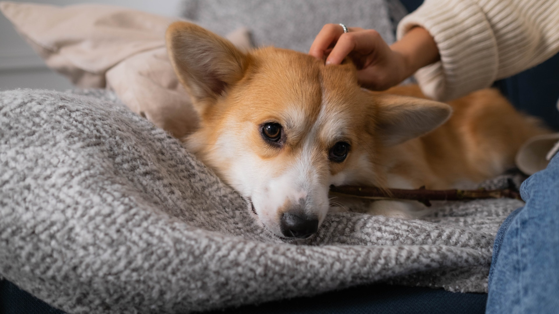 treating dog dandruff