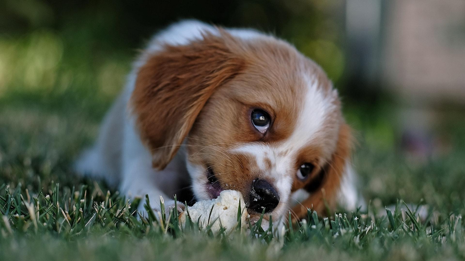 choosing antibiotic cream for dogs