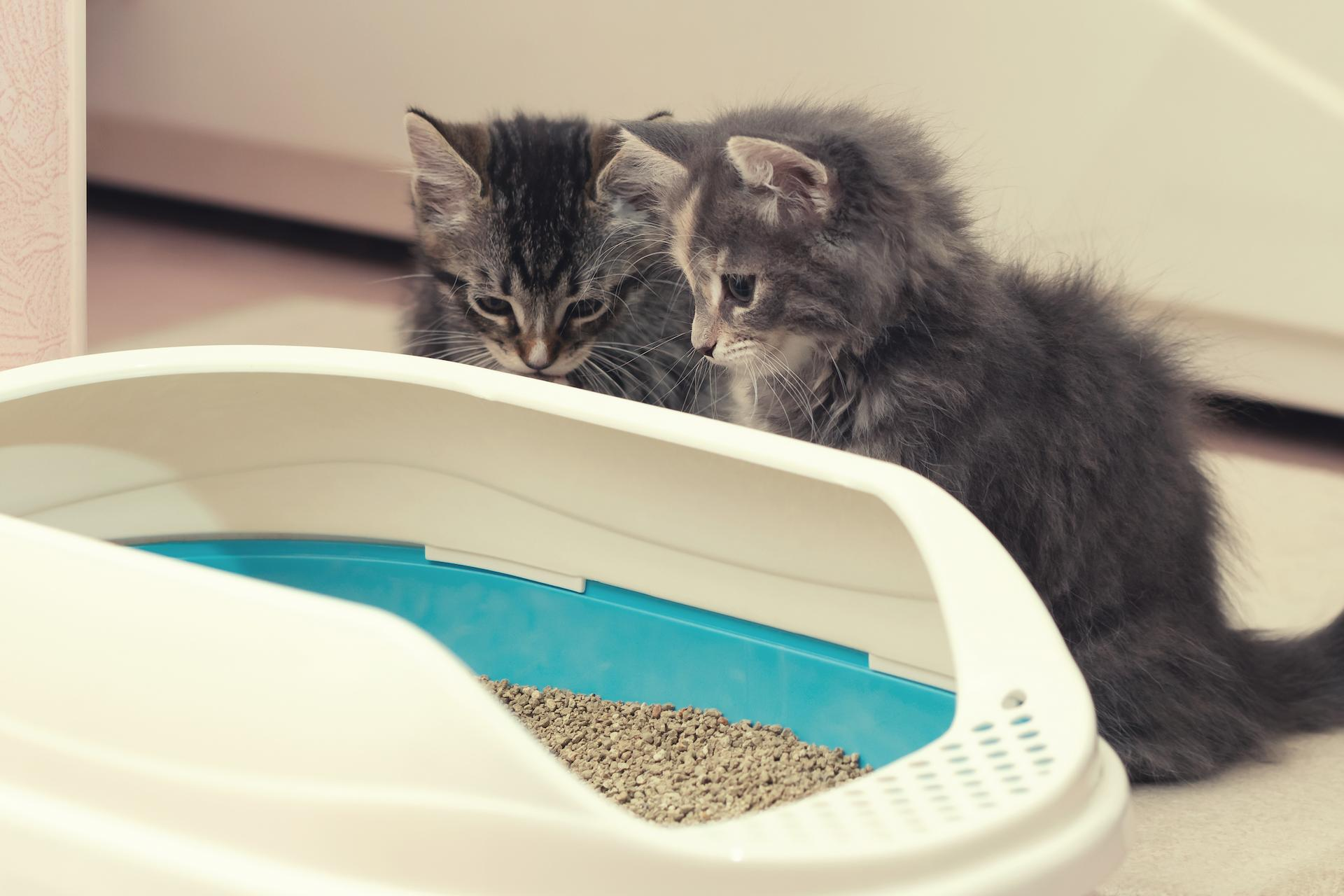 There are many different things that you can do to keep a cat from eating kitty litter, including changing the kitty litter that...