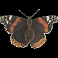 Orange moth icon