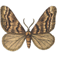 Tan and beige butterfly icon