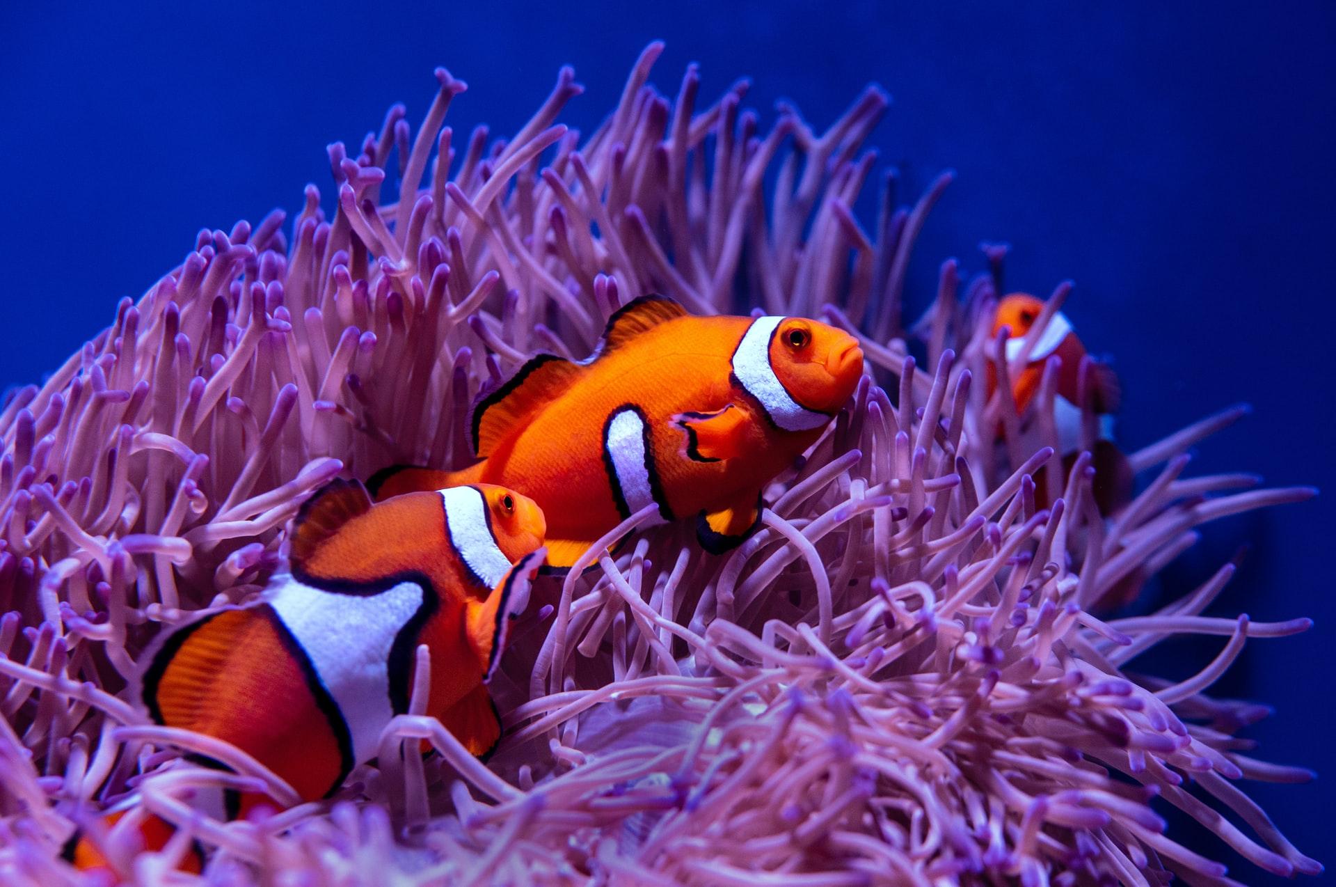 Smart solutions restoring coral reefs