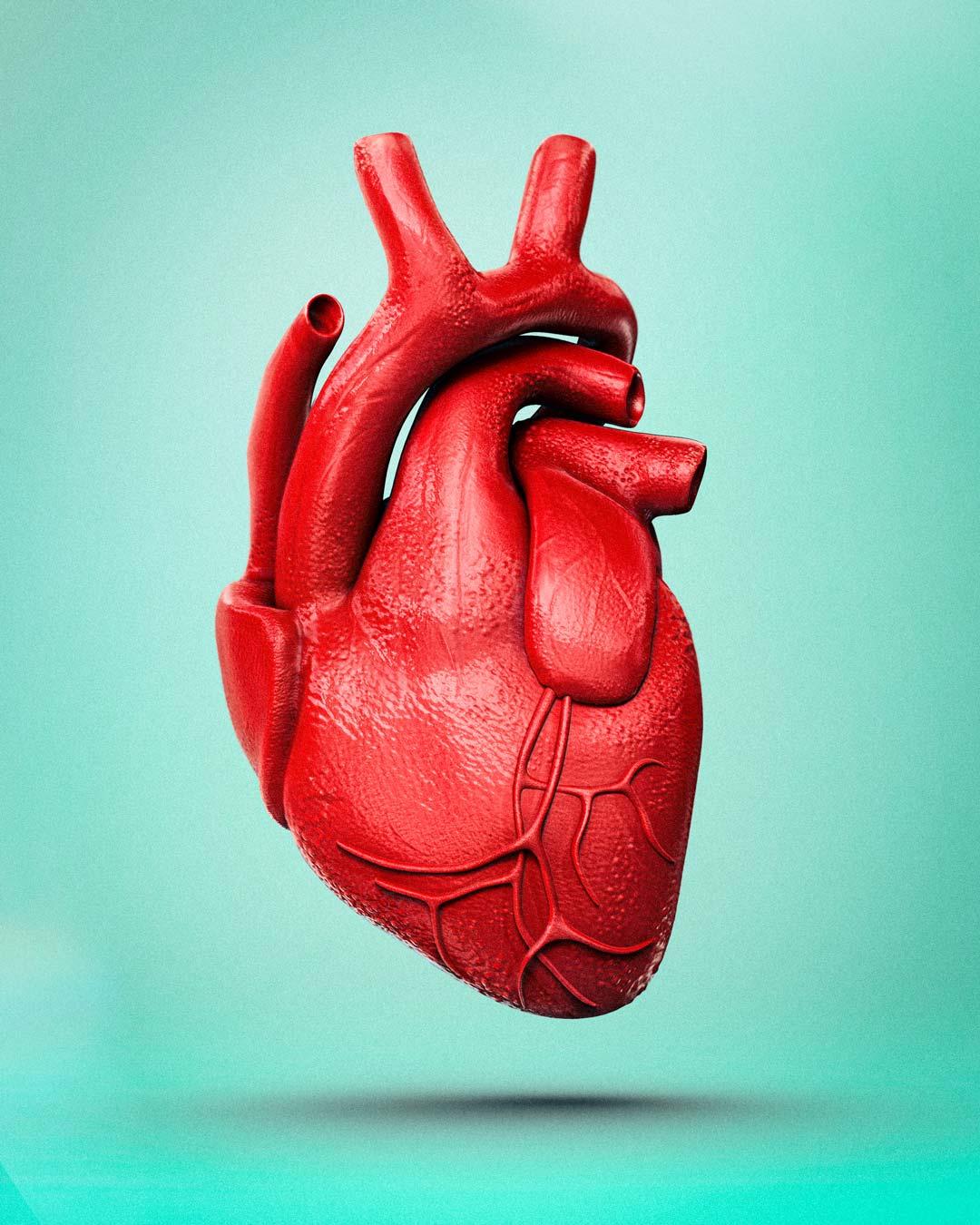 Heart by Adam Ingle