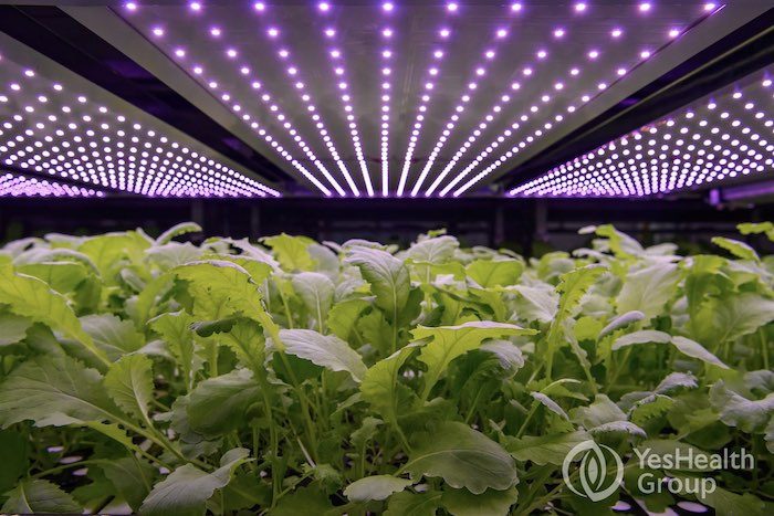 LED Spectrum | YesHealth Group | Photo by Alastair Philip Wiper