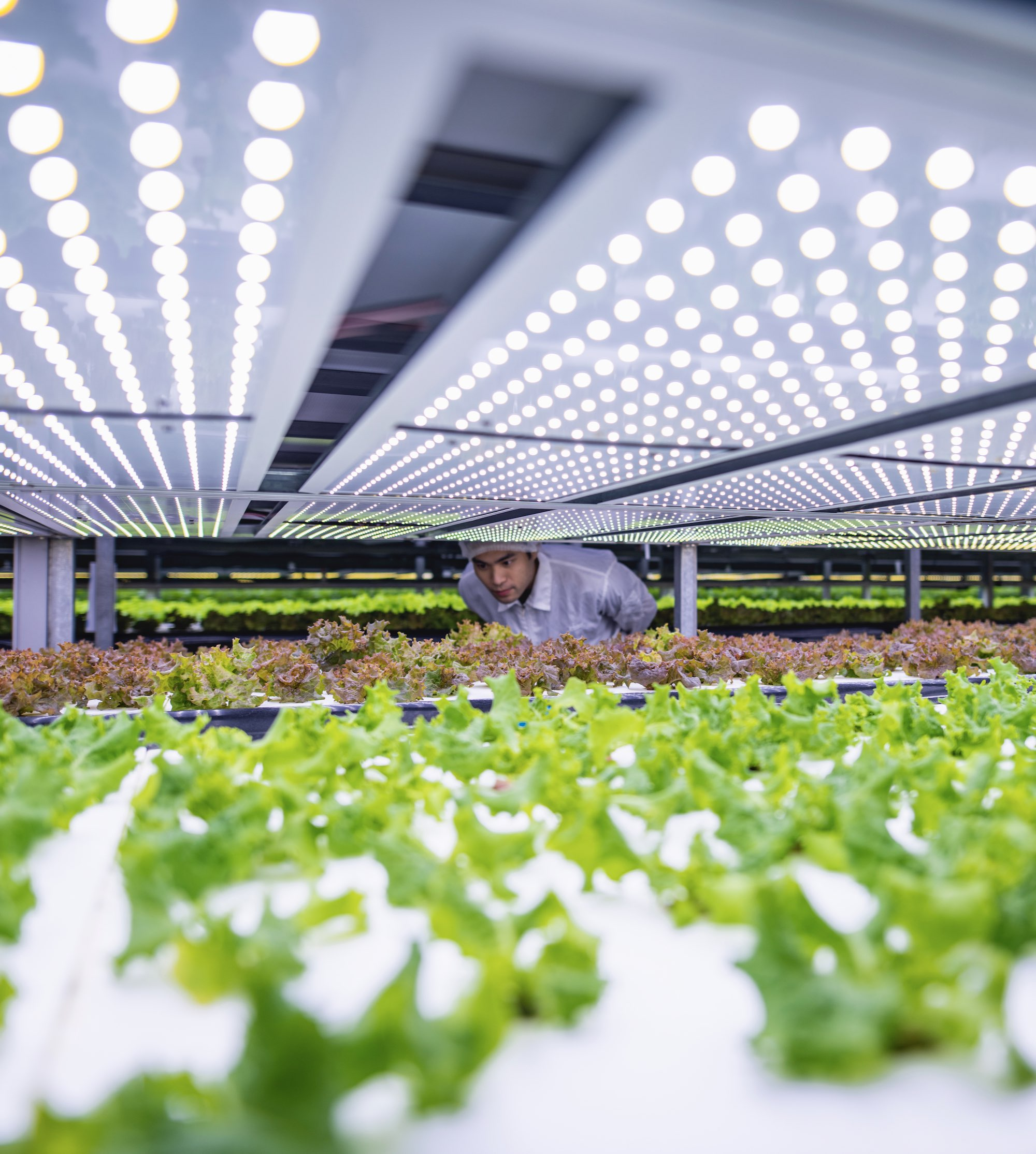 YesHealth Group vertical farm in Taiwan
