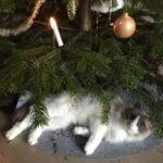 Qvitt - Nikotinfri katt - Manne Malmros