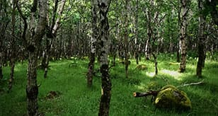 Native Woodland Communities in the Landscape