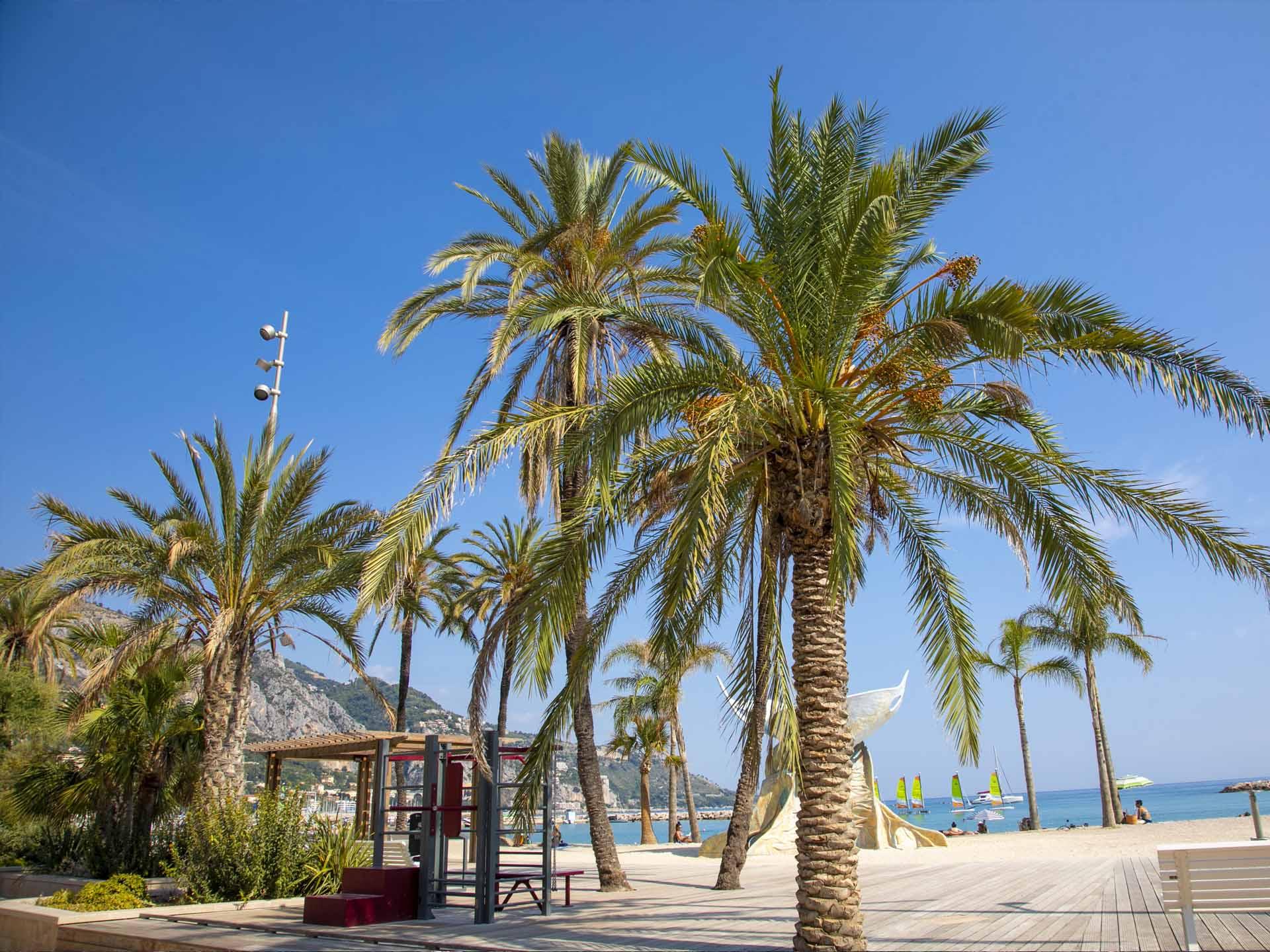 Photo de la plage des Sablettes avec les palmiers et l'aire de fitness AirFit