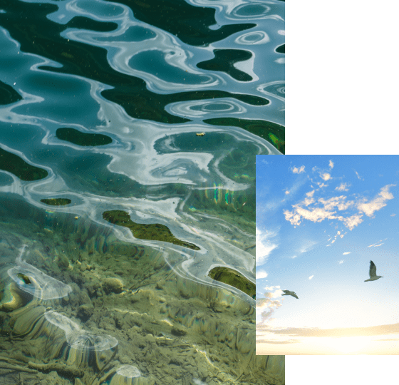 A photo collage of pristine water and blue sky with birds flying.