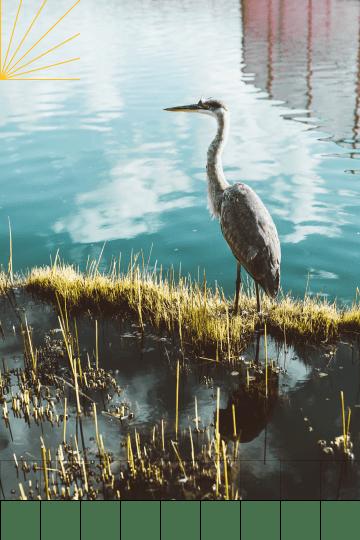 A heron perched on a pristine shoreline.