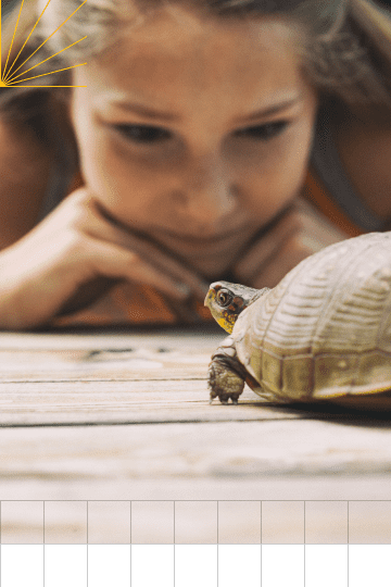 A young girl observes a turtle.
