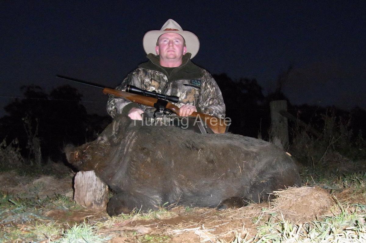 mountain boar