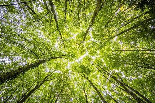 Ein Wald mit Bäumen um die Nachhaltigkeit von FORUM Family Office zu veranschaulchenfür Mittelstand