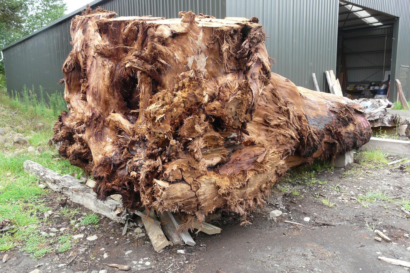 Kauri Holztische aus kostbarem Wurzelholz mit einzigartigem Naturwuchs, tausendjähriger Wurzelstamm für außergewöhnliche Baumstammtische, große Esstische und Konferenztische