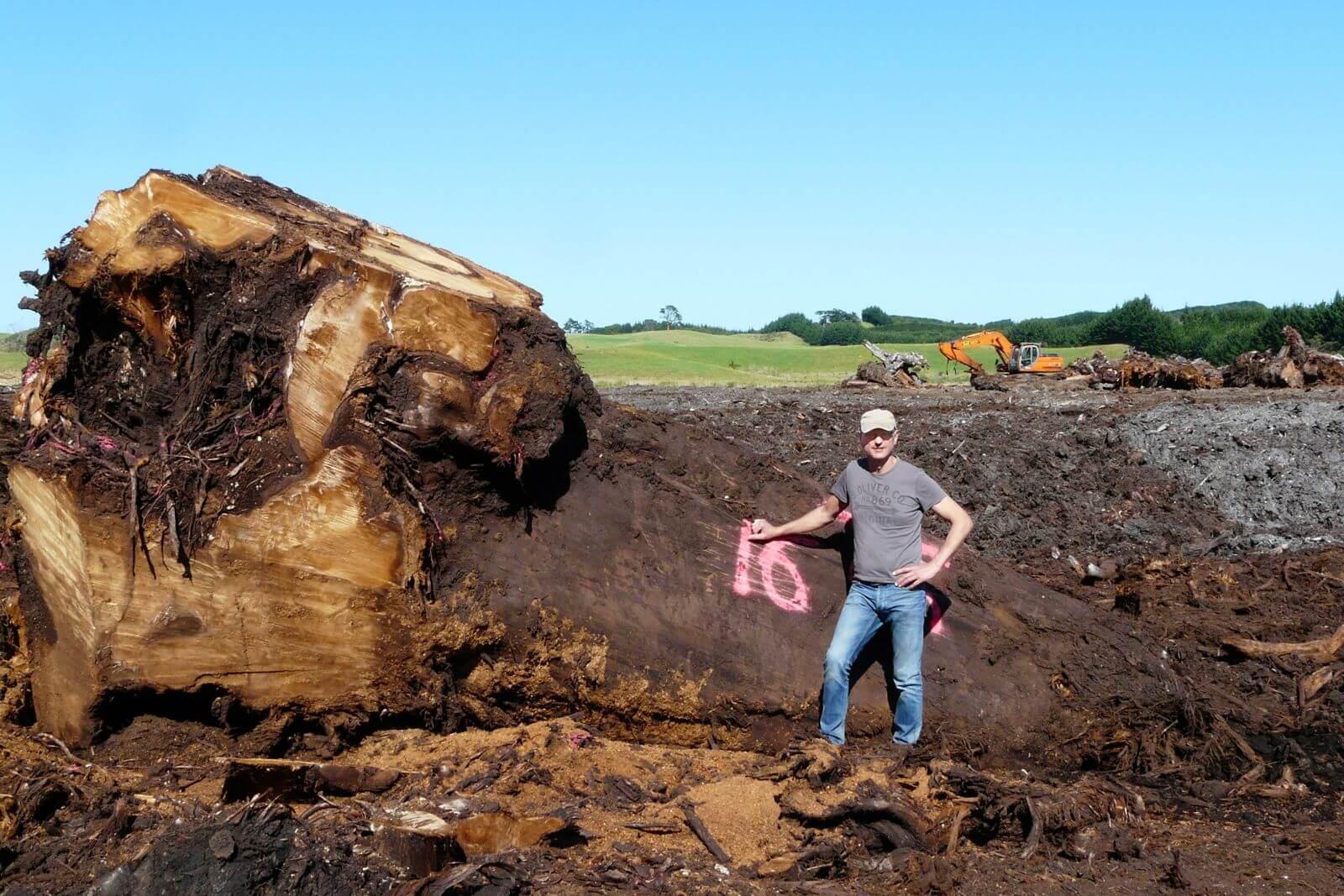 Schreinermeister Michael Beaupoil in Neuseeland bei Ausgrabung von tausendjährigen Kauri Bäumen zur Fertigung von Unikat Holztischen