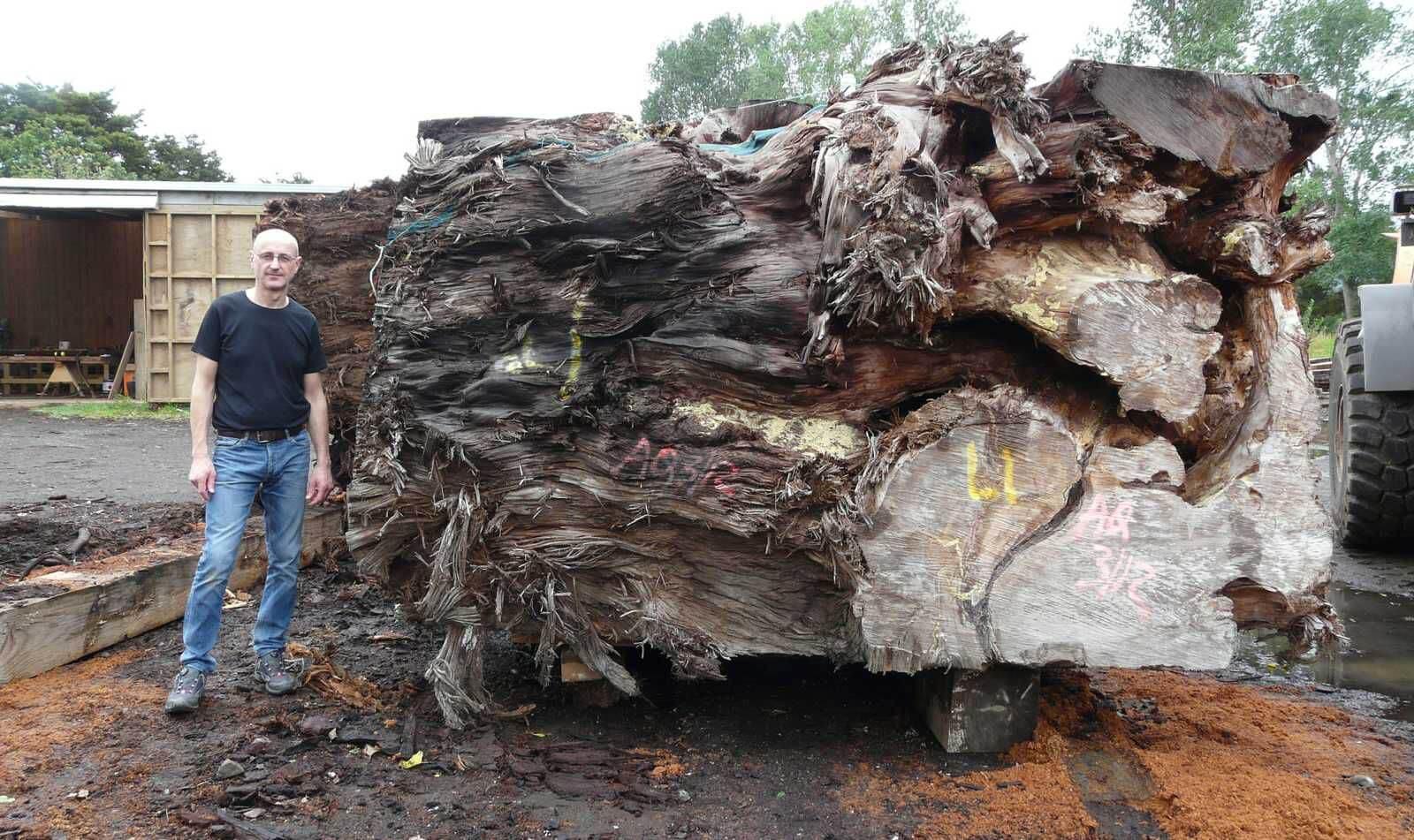 Riesige 50.000 Jahre alte Kauri Wurzel mit Schreinermeister Michael Beaupoil in Neuseeland