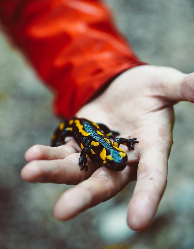 Salamander Dreaming