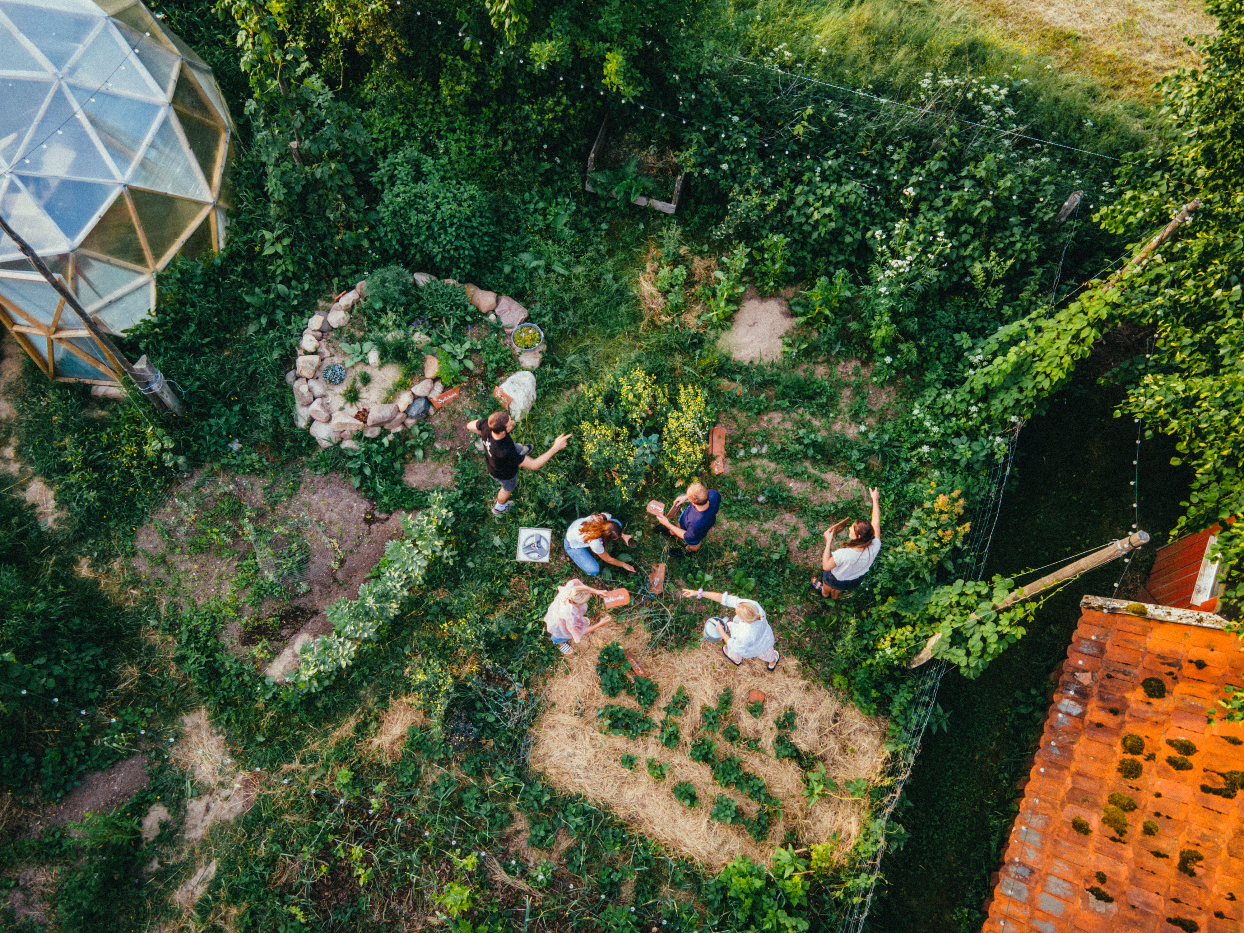 Aerial view of people watering the sunny garden